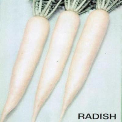 Shop online Radish (Sinandok)  vegetable seeds. Delivers in the Philippines.  Adding greenery made easy!