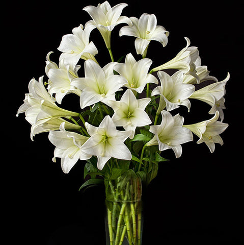 Shop online for cut flowers-Longiflorum 'White Heaven, liliums / lilies. Delivers in the Philippines! Buying flowers made easy!