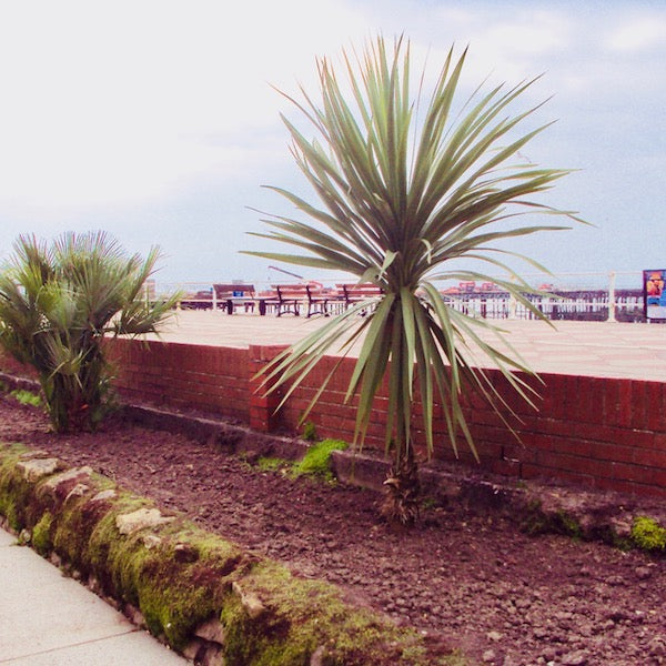 PALMS ON HASTINGS SEAFRONT