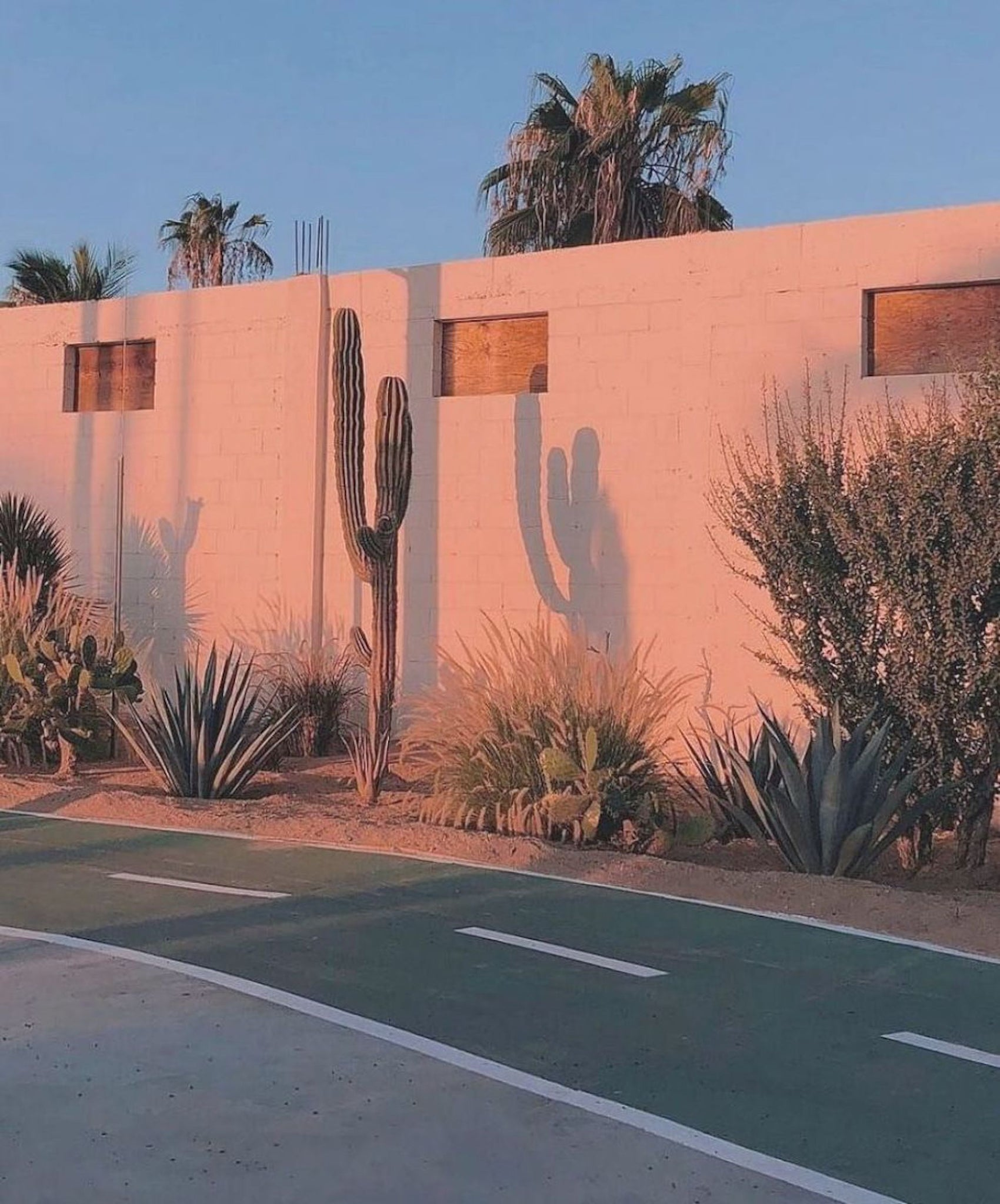 CACTI IN THE GLOWING SUNSET | DYKE & DEAN