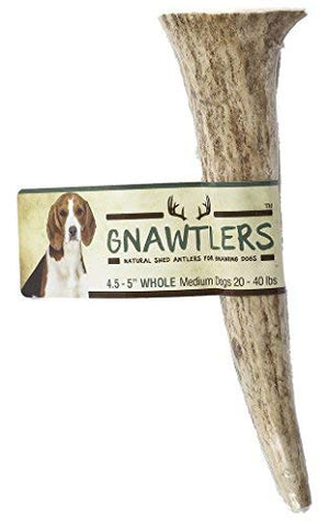 "Gnawtlers - Premium Elk Antlers For Dogs, Naturally Shed Elk Antlers, USA Natural Elk Antler Chews, Specially Selected Elks Antlers From The Rocky Mountain & Heartland Regions - 4.5""- 5"" Elk Antler - His Perfect Gifts"