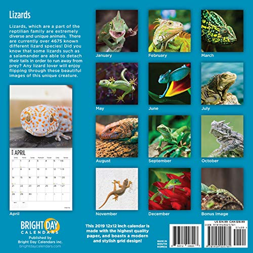 Lizards 2019 16 Month Wall Calendar 12 x 12 Inches - His Perfect Gifts