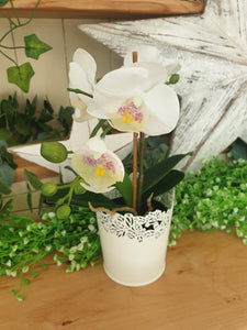 Cute Little Potted Orchids