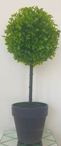 Potted Boxwood Topiary Tree