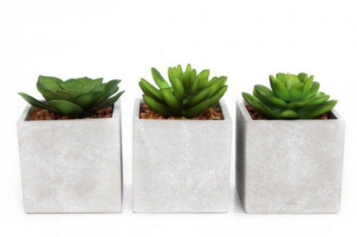 Artificial Succulents - Set of Three