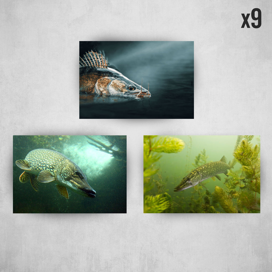 Raubfisch Sticker Set