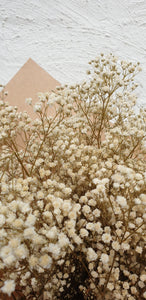 Preserved Gypsophila