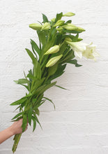 Load image into Gallery viewer, Christmas Lillies