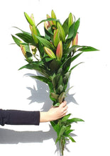 Load image into Gallery viewer, Oriental Lilies