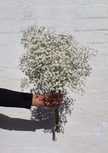 Load image into Gallery viewer, Gypsophilia