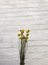 Load image into Gallery viewer, Billy Buttons