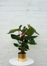 Load image into Gallery viewer, Potted Anthurium