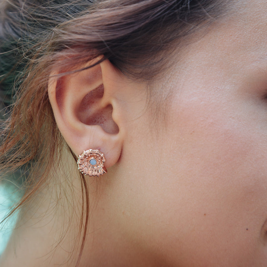 Rose Gold Nautilus Shell Studs