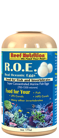 R.O.E. - Real Oceanic Eggs
