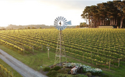 2016 Ten Minutes by Tractor Wallis Chardonnay