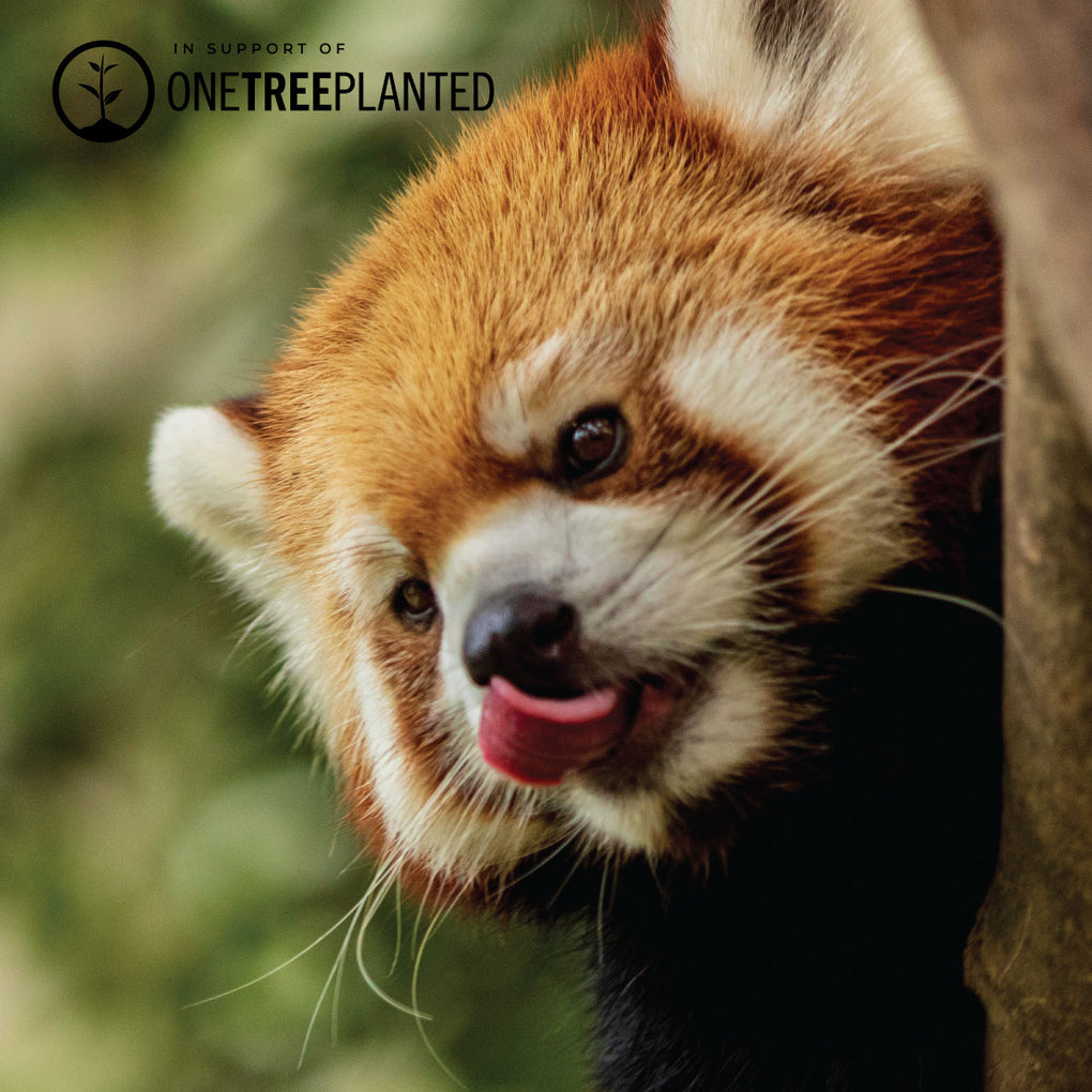 Red Panda Links | Original Kismet Bracelet | Red x Silver