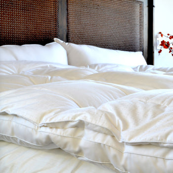 What To Look For In A Mattress Lofty Ideas What Do Bed Bugs