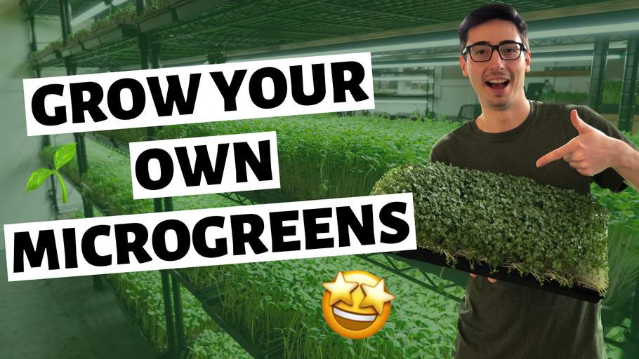 How To Grow Microgreens Indoors (SEED to HARVEST)