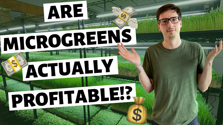 Microgreens Business… Is It ACTUALLY PROFITABLE??