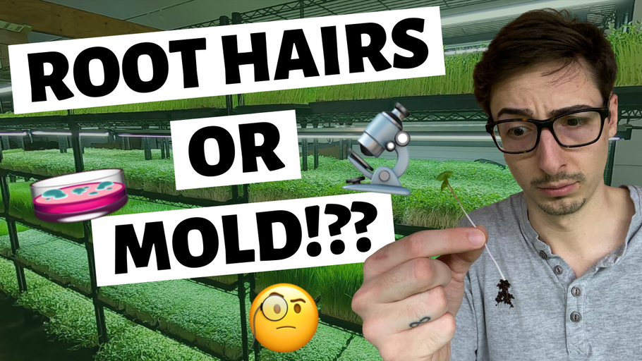 Microgreens MOLD or ROOT HAIRS & How To Tell The Difference?!