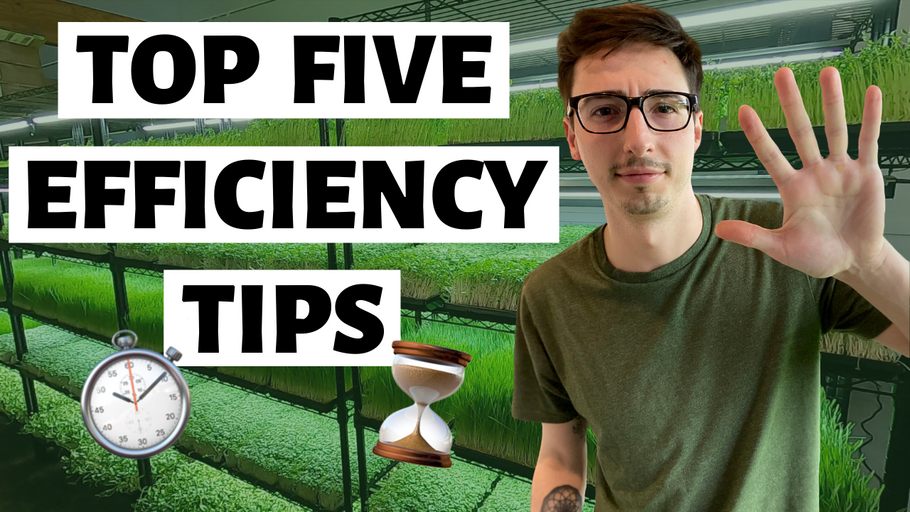 Microgreens Business: 5 tips to IMPROVE EFFICIENCY