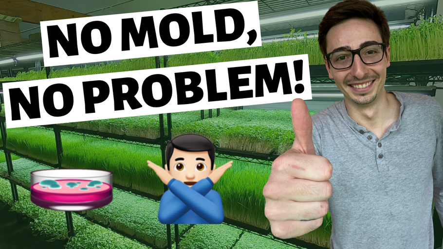 How to PREVENT Microgreens MOLD (Problem SOLVED)