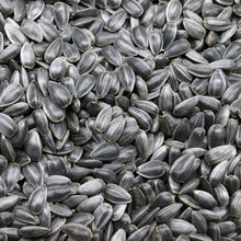 Load image into Gallery viewer, Organic & Non-GMO Black Oil SUNFLOWER MICROGREENS SEEDS