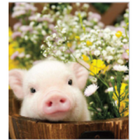Baggins Calico Cat - Aurora - Toys101