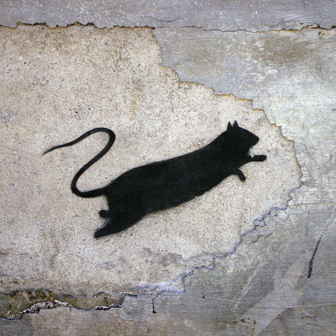 "Blek le Rat ""Ratical"""