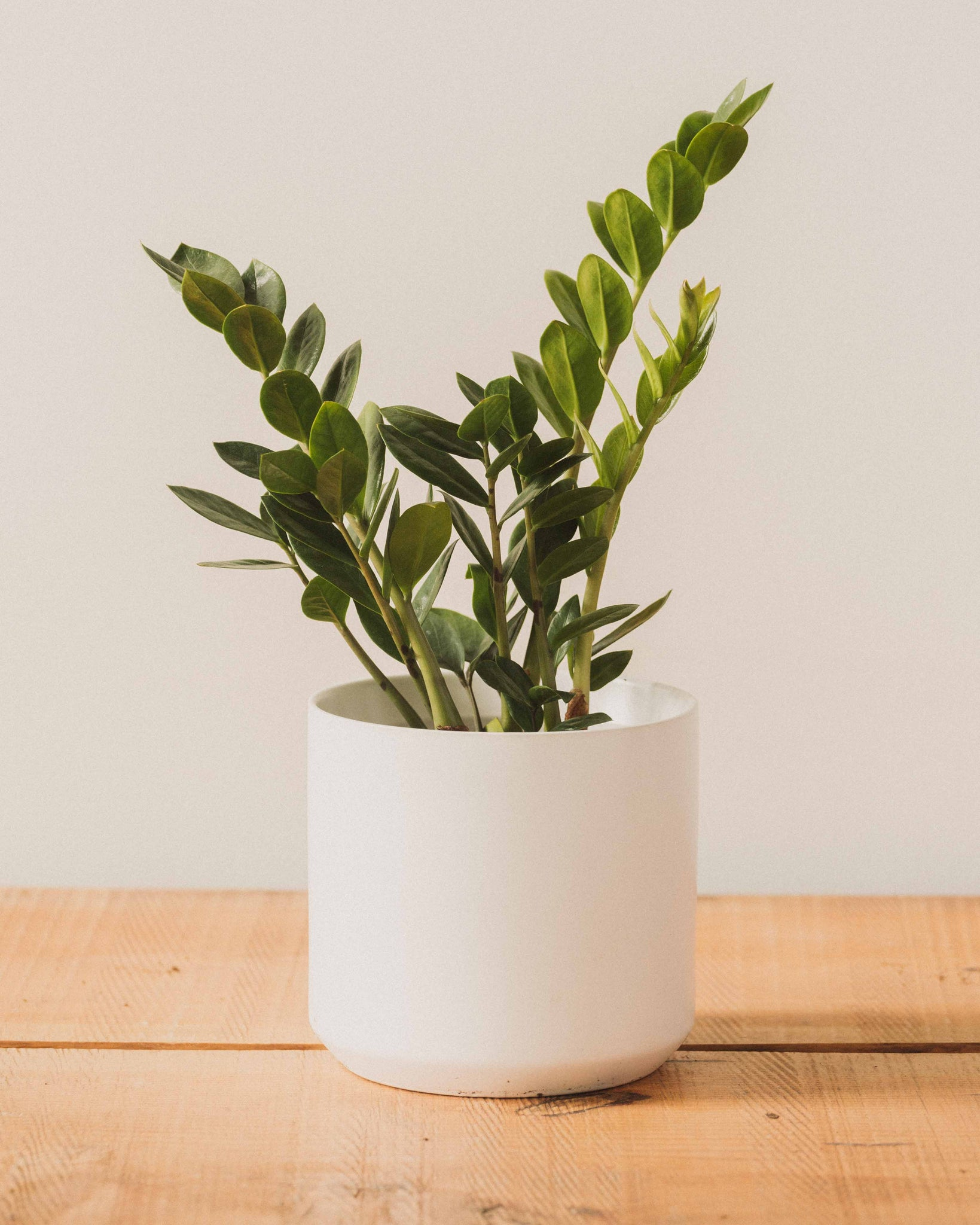 Kendall Pot, White