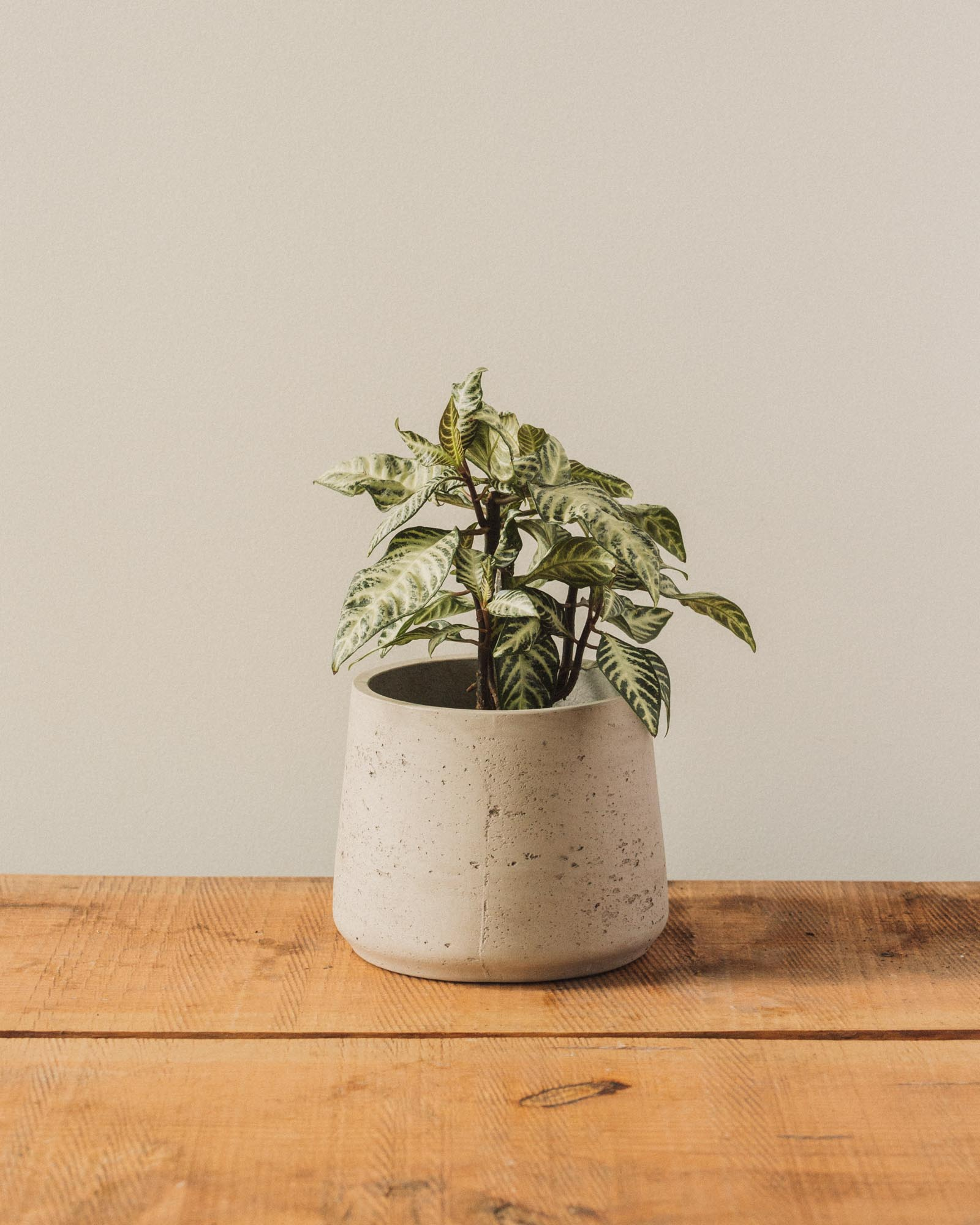 Patt Pots, Natural