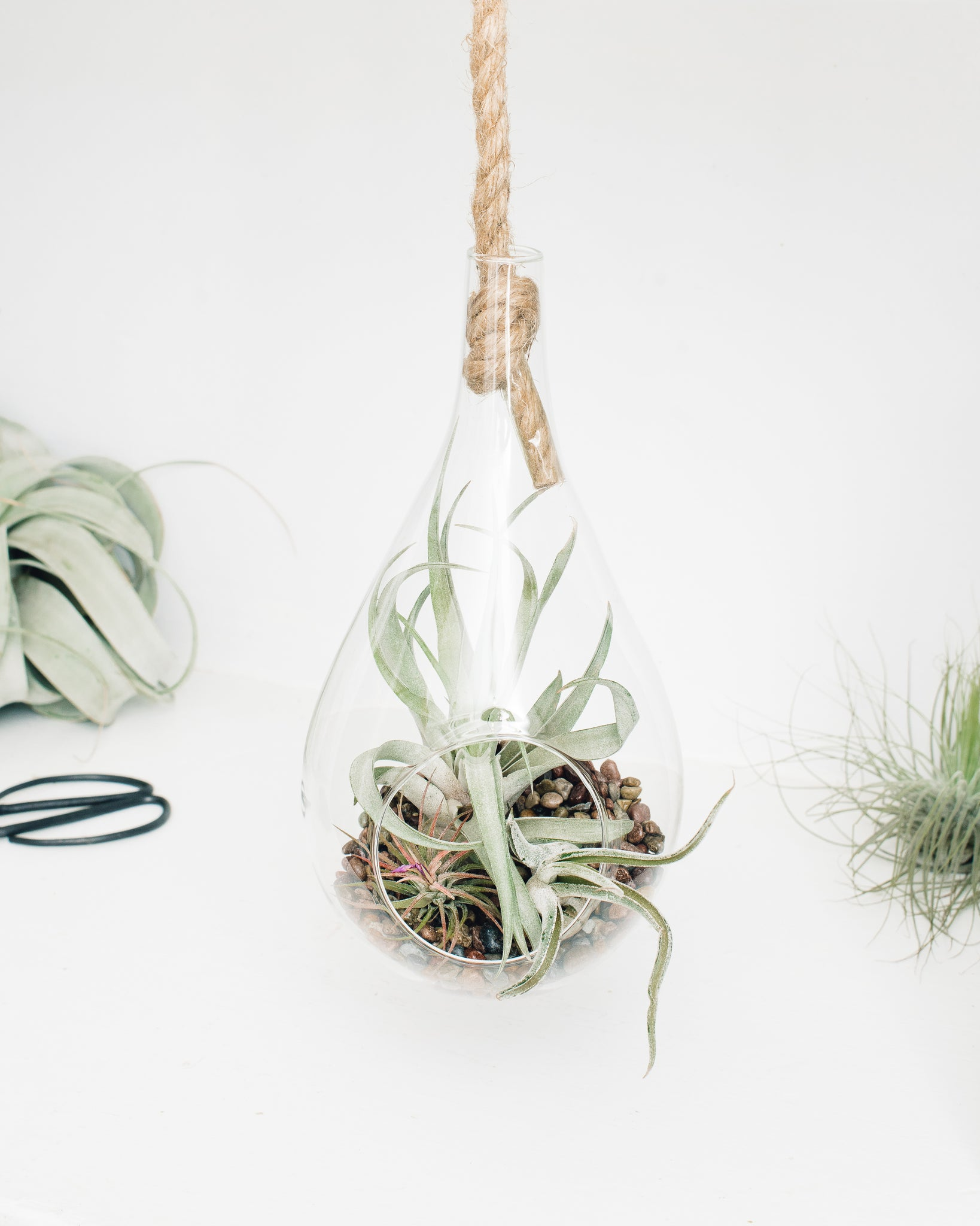 Hanging Rope Teardrop Terrariums
