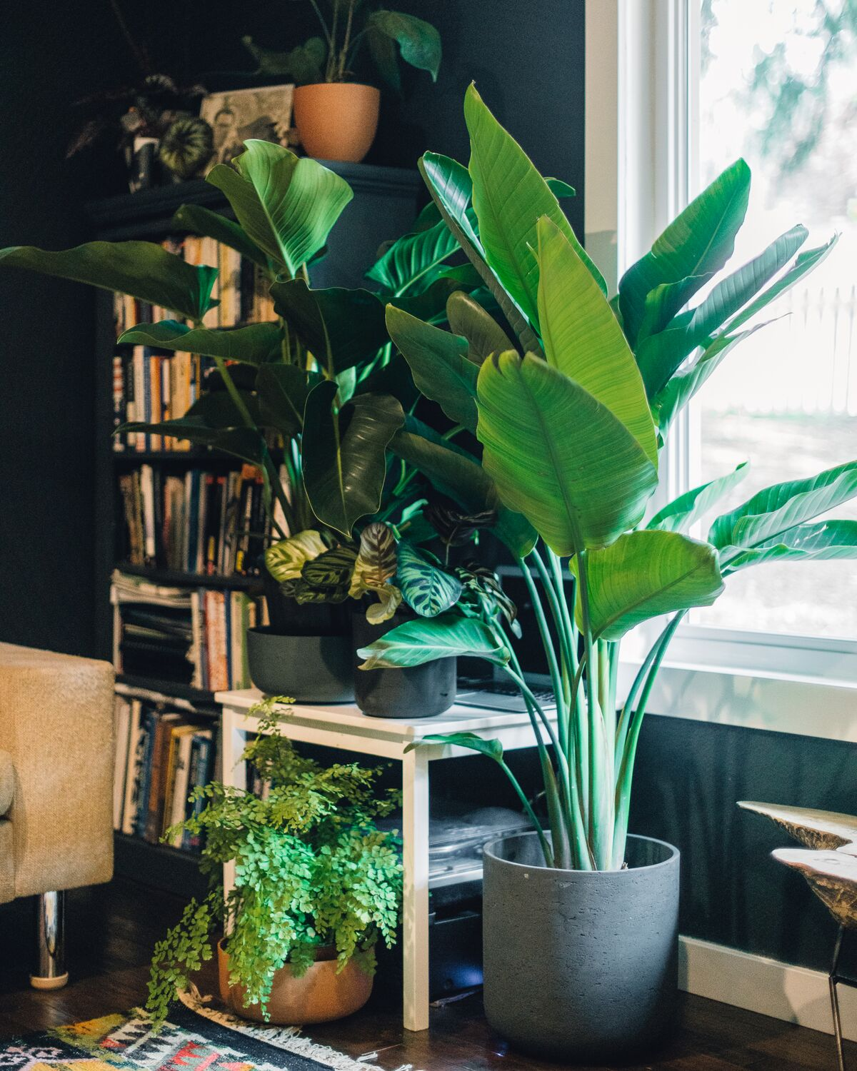 *Virtual* Houseplants 101 Class