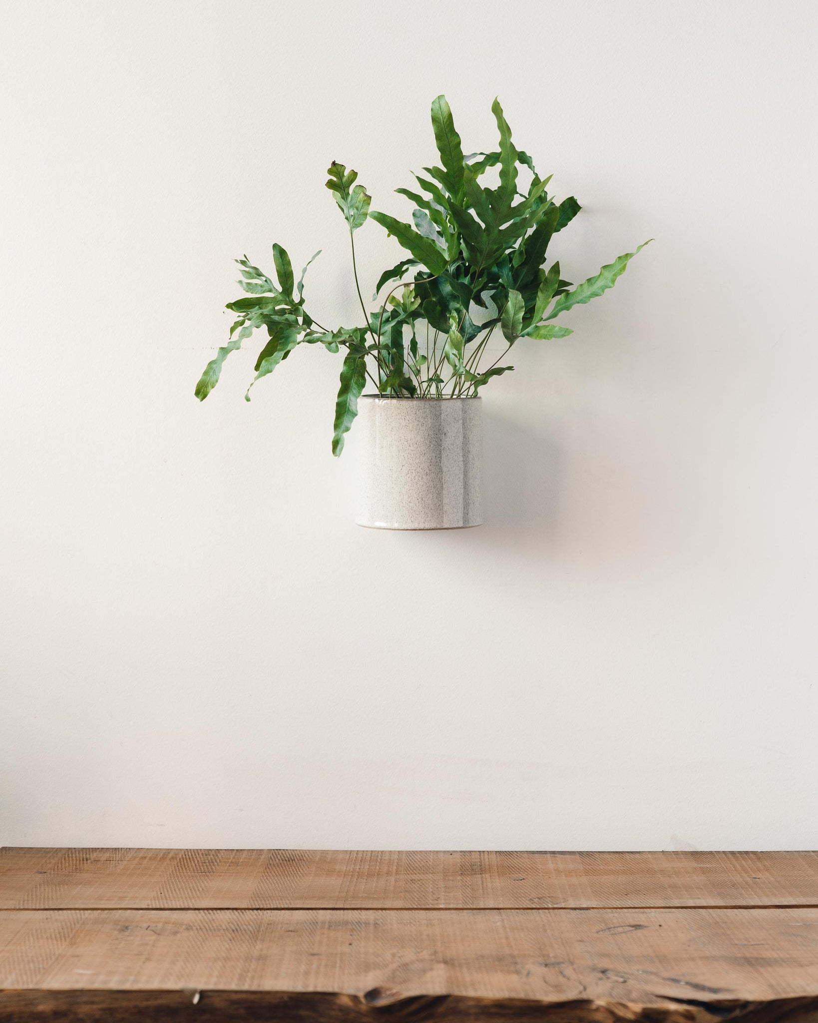 Logan Ceramic Hanging Wall Pot
