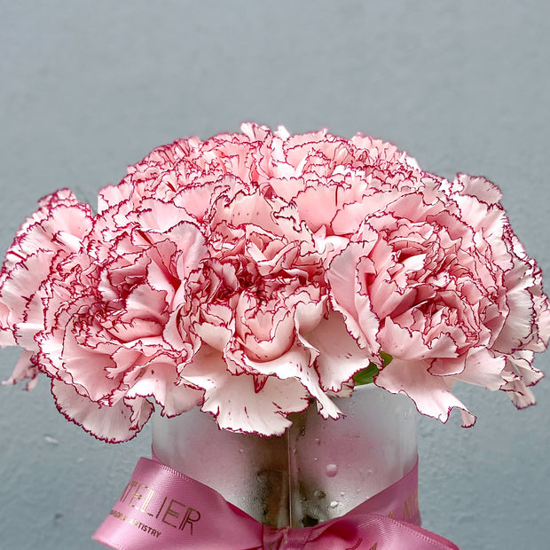 Timeless Special Pink Carnations