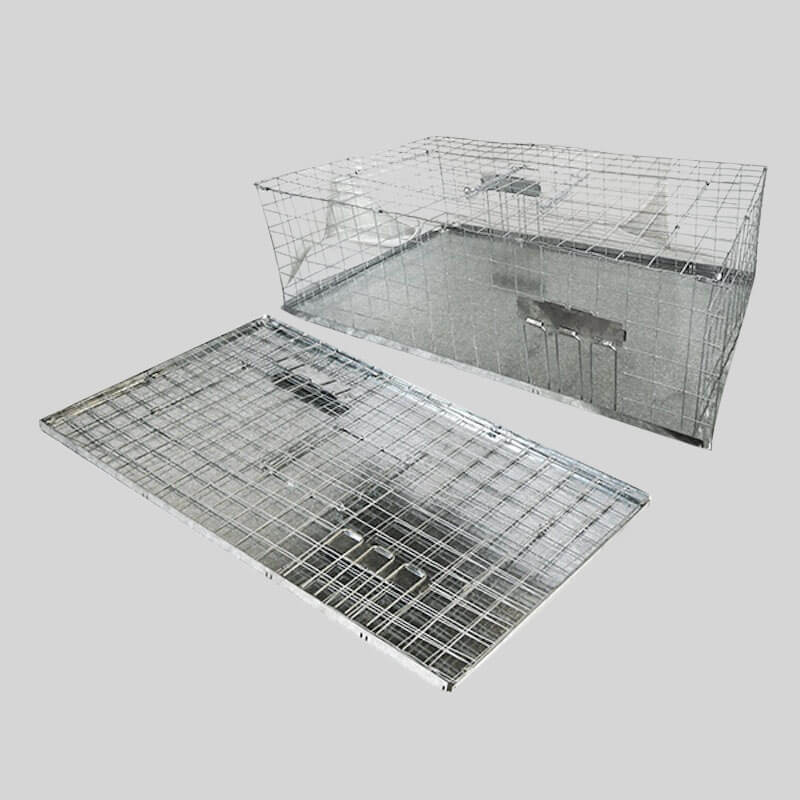 Folding Pigeon Trap