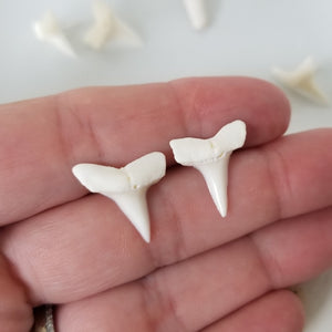 Real Shark Tooth Stud Earrings - Sterling Silver