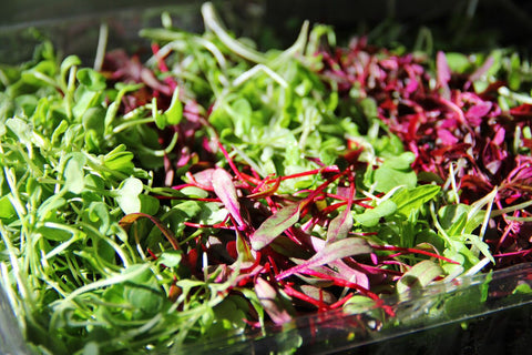 MicroGreens Seeds USDA Organic