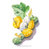 Summer Patty Pan Scallop Squash Blend Seeds