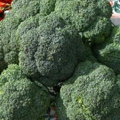 Belstar Broccoli Seeds