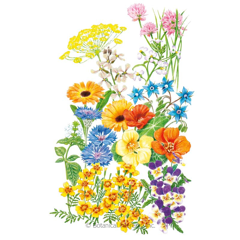 Edible Beauties Flower Seed Mix