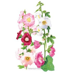 Outhouse Hollyhock