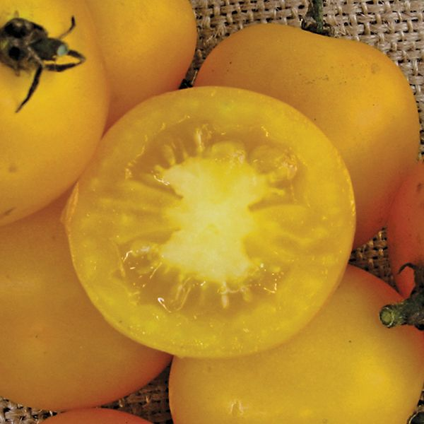 Yellow Perfection Tomato Seeds