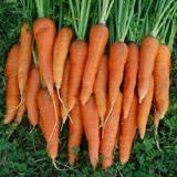 St. Valery Carrot Seeds