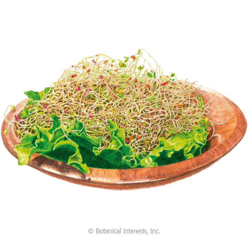 Salad Mix Sprouts