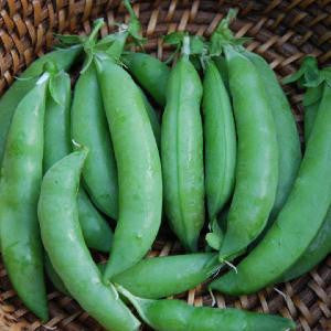 Sugar Snap Pea Seed