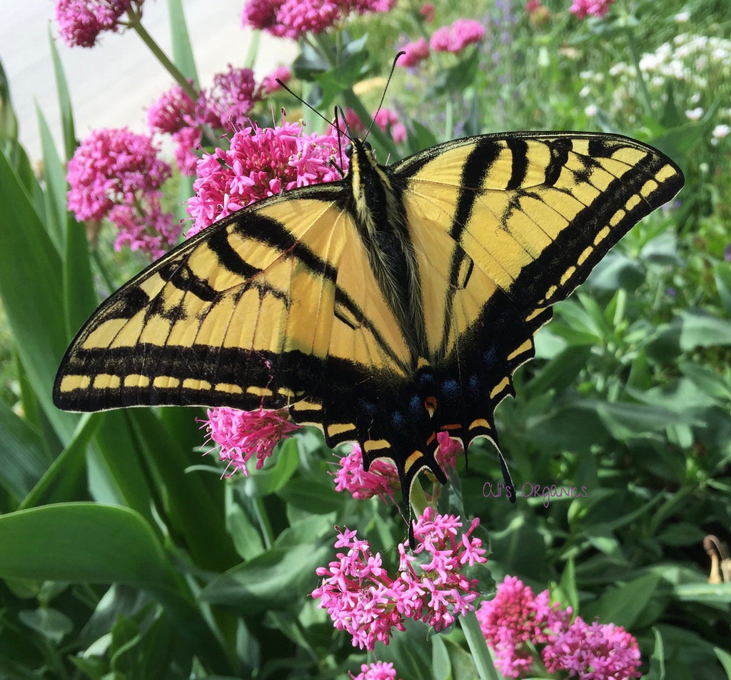 Bring Home the Butterflies Flower Seed Mix