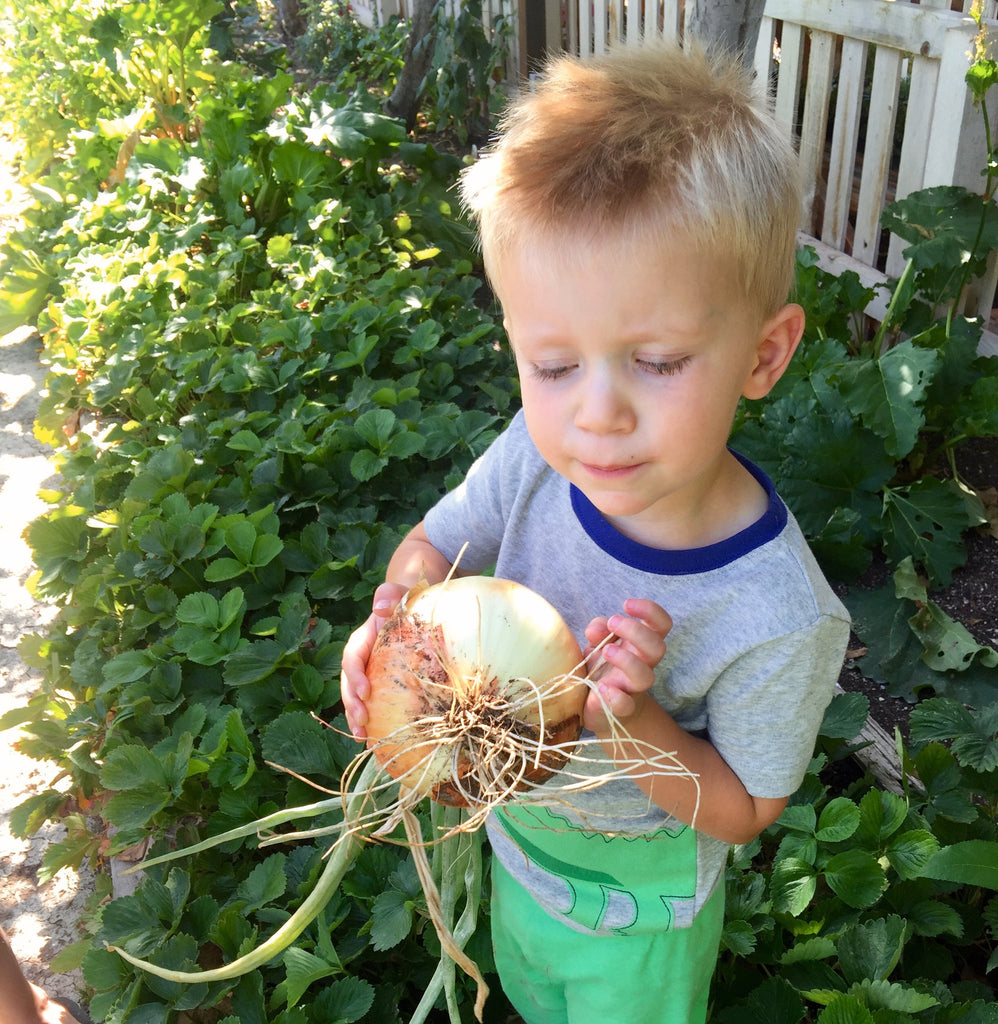 Genuine Walla Walla Sweet Onion Seed