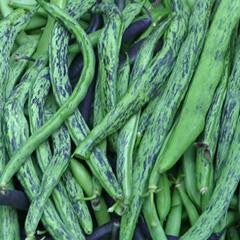 Rattlesnake Pole Bean Seeds