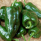 Ancho Poblano Pepper Seeds